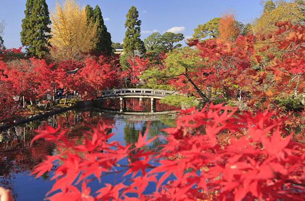 danh sanh nhung diem den ngam mua la do o Kyoto 2